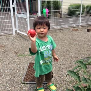 野菜収穫6.15②