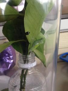 蝶の成長9.24