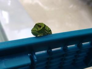 蝶の成長9.17①