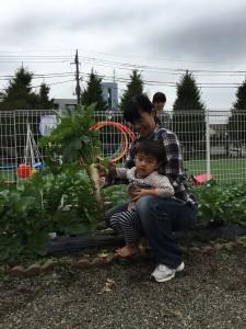 大根の収穫10.23⑧