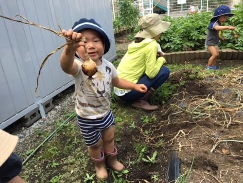 玉ねぎ収穫⑥