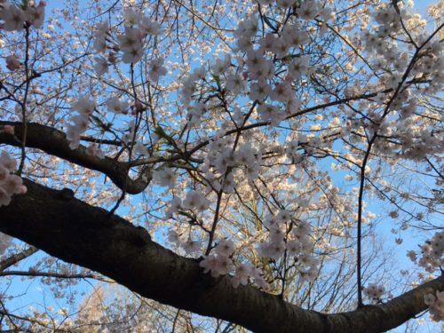 0407横山公園②